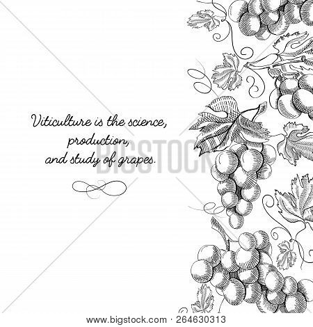 Typography Design Original Card Doodle With Inscription That Viticulture Is Science, Production And