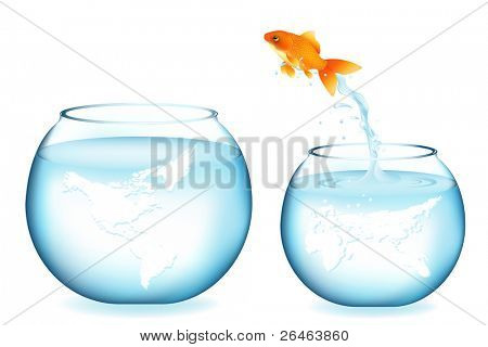 Golden Fish Jumping To Other Globe Aquarium, Isolated On White