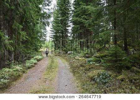 Man Is Walking On A Dirt Road In A Coniferous Forest