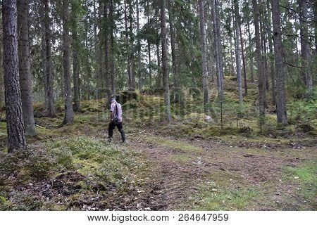 Senior Walks In A Beautiful Coniferous Forest