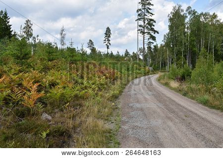 Gravel Road Through A Beautiful Colored Coniferous Forest