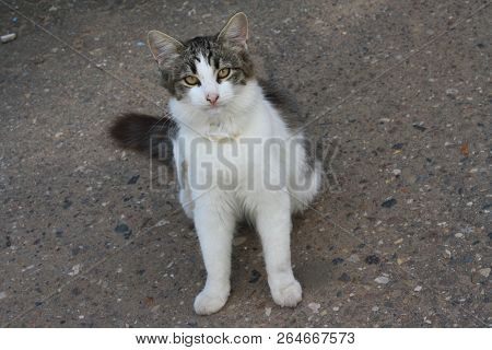 A Friendly Stray Cat Wth A Colar Sitting On The Ground