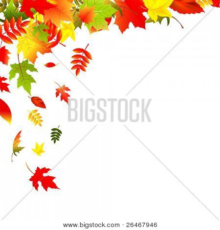 Falling Leaves, Isolated On White Background, Vector Illustration