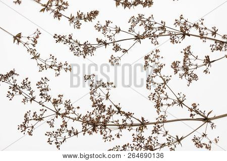 Dry Plants On A White.