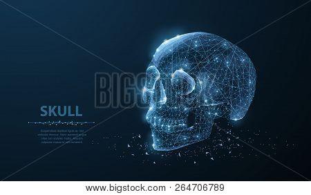 Skull. Abstract Vector Polygonal Skeleton Skull Illustration On Dark Blue Background With Stars.