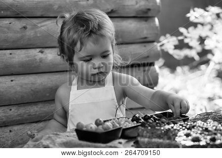 Cute Little Boy With Blond Hair In White Pinafore Eats Red Raspberry At Rustic Table With Berries An