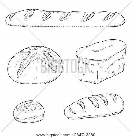 Vector Sketch Set Of Fresh Baked Bread Loaves And Baguettes