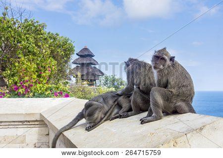 Playful Monkeys At The Uluwatu Temple In Bali, Indonesia