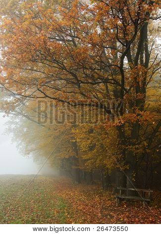 Hazy autumnal fall landscape -  trees in forest