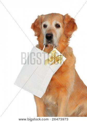 "My dog -"" Golden retriever "" like dog, which bears presents on white background"