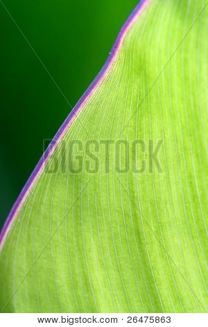 Detail of green leaf a shallow DOF