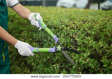 Close Up Of Male Worker Hand Trimming And Landscaping Green Bushes Near House In Backyard. Professio