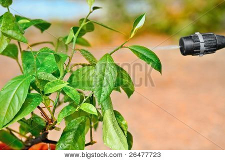Picture of spray and spraying leafs