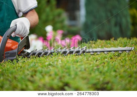 Professional Male Gardener, Wearing In Special Overalls With Protective Glove Working With Professio