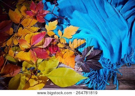 Autumn Fall Leaves And A Warm Blue Scarf. Top View