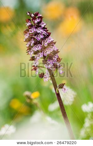 Macro shot of small orchid flower - soft focus