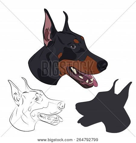 Doberman Pinscher Face Isolated On White Background. Silhouette Of Dog Head. Dobermann Panting With