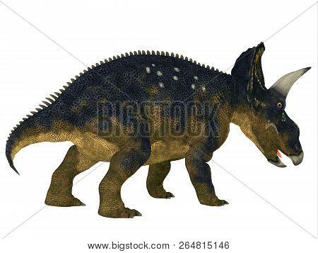 Nedoceratops Dinosaur Tail 3d Illustration - Nedoceratops Was A Horned Herbivorous Ceratopsian Dinos