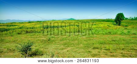Green Glass Field Plant Grass Environment Landscape Sky Green Color Tranquil Scene Land Tranquility