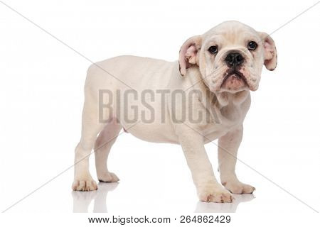 Side View Adorable Image & Photo (Free Trial)   Bigstock