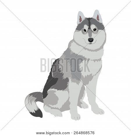 Husky Dog Sitting Isolated On White Background. Sled Dog Illustration. Cute Alaskan Malamute Dog For