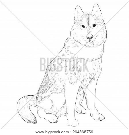 Dog Sled Images Illustrations Vectors Free