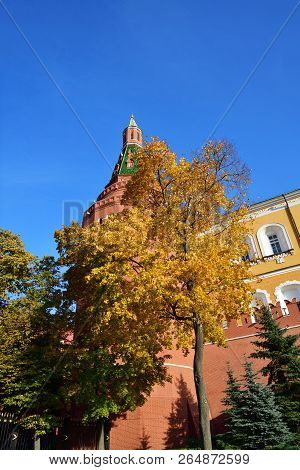 Bright foliage on an autumn tree and the Corner Arsenal Tower of the Moscow Kremlin against the blue sky. Moscow at autumn. Russia. View from the Alexander Garden poster