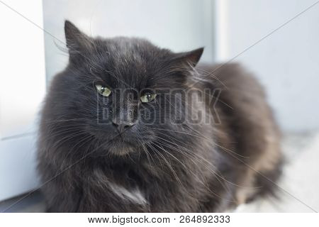 Portrait of a black cat that sits on a windowsill outside poster
