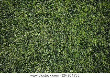 Bright Green Grass Background. Fresh Green Grass Field. Top View. Green Grass Texture For Print, Web