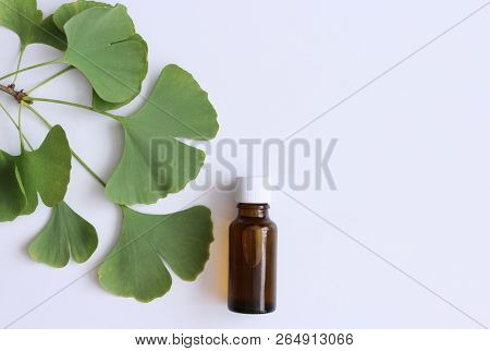 Tincture Gingo Biloba On White Wooden Table.medicinal Herb Ginkgo Biloba. Healthy Concept.top View.