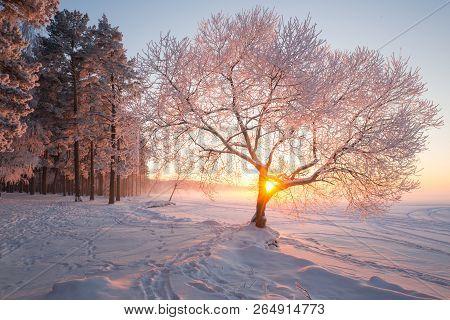 Winter Landscape. Christmas Nature. Christmas Evening Landscape. Winter Wonderland. White Frosty Tre