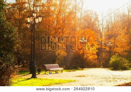 Autumn October landscape. Bench at the autumn park under colorful deciduous trees lit by bright sunlight - sunny autumn view. Autumn trees with yellowed foliage in sunny October park lit by sunshine. Colorful autumn landscape in bright tones