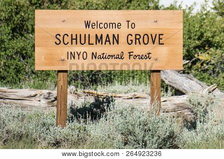 Sign For The Schulman Grove In The Ancient Bristlecone Pine Forest, Located In California's Inyo Nat