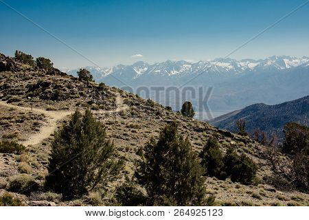 The White Mountains In California, In Summer In The Inyo National Forest
