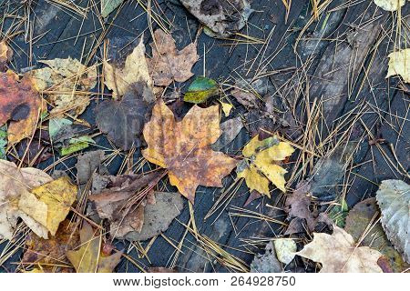 Autumn Leaves Scattered On A Wooden Bridge, Closeup, Background, Abstract