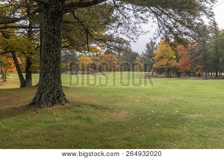 Beautiful Green Grassy Landscape With Colorful Autumn Trees