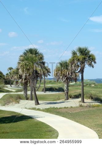 Vertical Palm Palmetto Trees With Winding Sidewalk