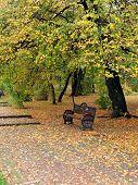 Autumn scene with empty bench and fallen leaves  - depression, depressive, solitude poster