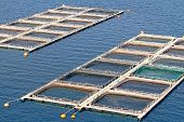 Aquaculture, fish farms in fresh waters in Peloponesse, Greece poster