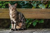 Cat outside - house cat or street cat, feral cats outdoors. poster