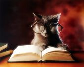 gray cat with glasses reading a book poster