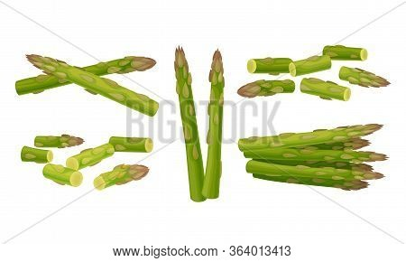 Green Asparagus Spears Whole And Cut Vector Set