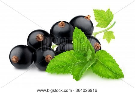 Composition With Blackcurrant And Sprig Of Mint Isolated On A White Background