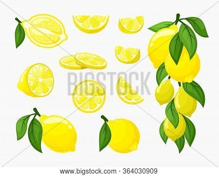 Set Of Lemons. Illustration Of Yellow Citrus Fresh Juicy, A Bunch Of Ripe Lemon On A Branch With Lea