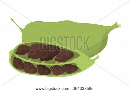 Cardamom Spice Vector Isolated. Green Natural Ingredient