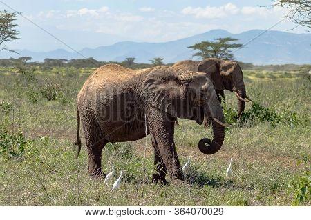 Two Elephants In Samburu Park Busy Taking A Bath Of Pyres In Central Kenya