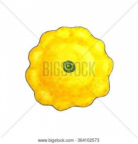 Watercolor Yellow Zucchini Squash Scallop Zucchini Vegan Food, Menu