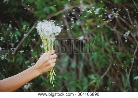 Dandelion Flower In Girl Hand Close-up. Blowball Seeds Fly In Wind On Green Bokeh Background. Beauti