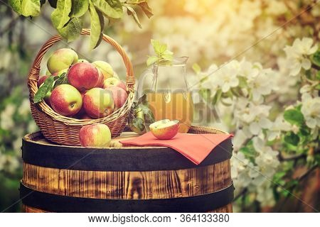 Basket of apples on background orchard standing on a barrel. Apple juice bottle.