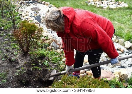 Woman In The Garden Digging. Digging The Land For Planting. Horticulture And Agriculture
